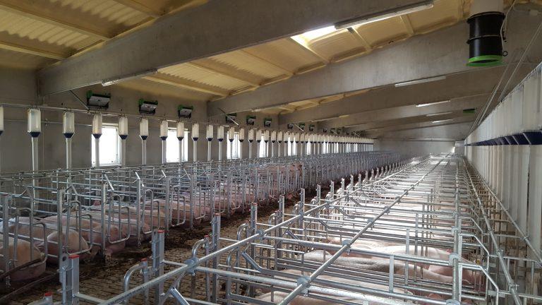 Alimentación granja porcino ventilacion granja porcino