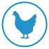 Bienestar de gallinas ponedoras