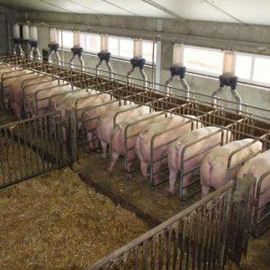 Dosificadores granjas cerdas madres roxell